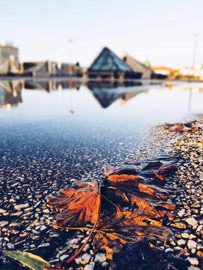 lovely nature Leaves Water Piramide University University Campus Aveiro UA Reflection Rain Wet Blue Phonecamera PhonePhotography SamsungGalaxyS8 Light Sun Shadow Sky And Clouds Lines Perspective Walking Around View Floor Portrait