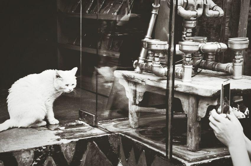 Asian  ASIA Traveling In China Beijing Houtong Travel Cat