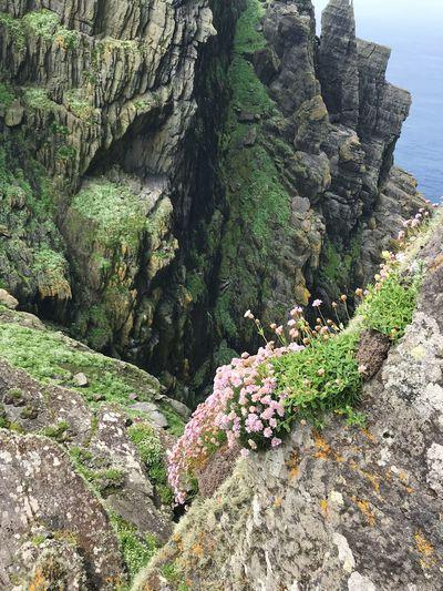 Plants growing on rocks by sea