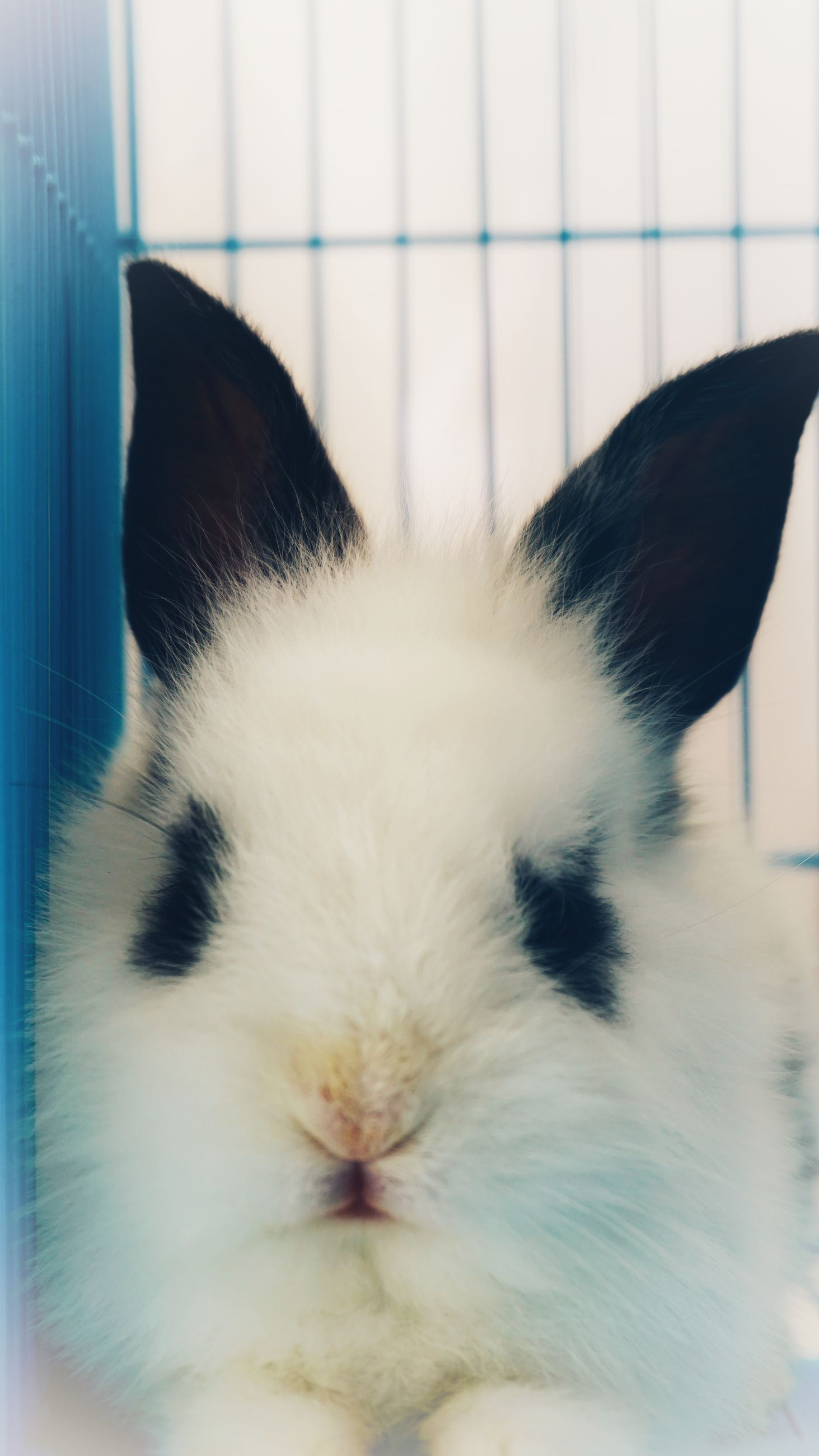 mammal, domestic, animal themes, pets, animal, one animal, domestic animals, vertebrate, cat, feline, close-up, domestic cat, rabbit - animal, indoors, animal body part, no people, rabbit, relaxation, white color, whisker, animal head