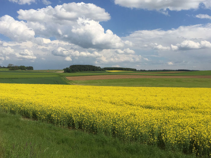 Yellow Landscape Beauty In Nature Scenics - Nature Cloud - Sky Tranquil Scene Field Environment Tranquility Land Sky Plant Growth Agriculture Oilseed Rape Flower Rural Scene Flowering Plant Outdoors No People Nature