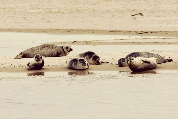 Seals on sand at beach