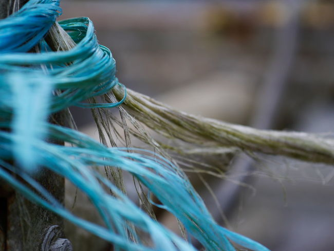 Blue Close-up Complexity Connection Day Focus On Foreground Germany Green Color Intertwined Nature No People Outdoor Outdoor Photography Outdoors Rope Selective Focus Still Life Strength String Strings Structure Tangled Tied Up Turquoise Colored Twisted