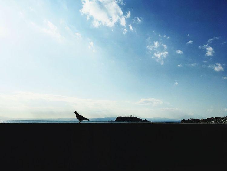 江の島 鳥 Bird Sky 江の島 海 青 Blue Breathing Space