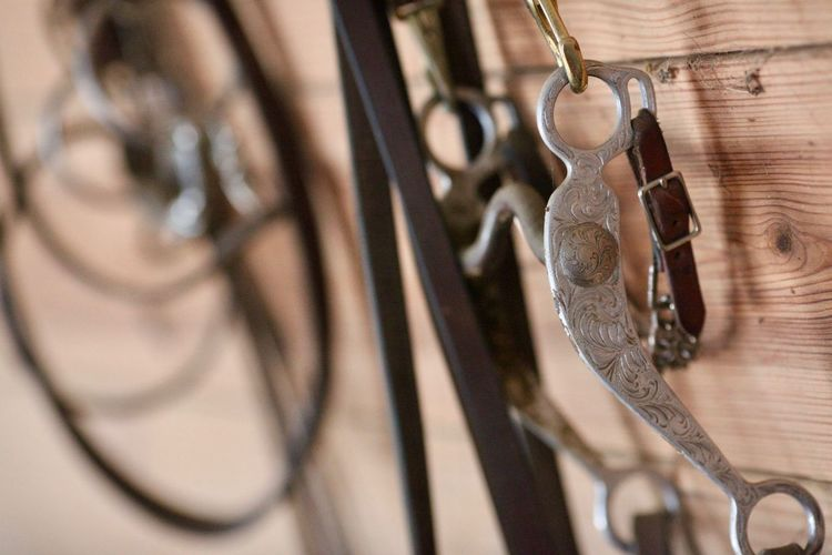 Close-up of bridles hanging on wooden wall