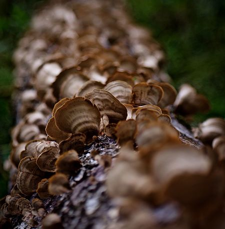 D5600 Animal Wildlife Close-up Plant Day Nature No People Selective Focus Tree Outdoors Fungus First Eyeem Photo EyeEmNewHere