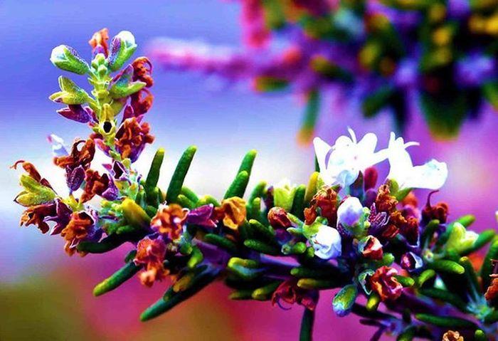 The season has technically changed, but this thing still sprouting white color flowers 1) Flowersandmacro 2) Electric_macro 3) Splendid_dof 4) Superb_flowers 5) Princely_shotz 6) Macro_perfection 7) 9vaga_flowersart9 8) Instaflower 9) Pocket_family 0) Rsa_nature 1) Rsa_macro 2) Pocket_dof 3) Igglobalclubmacro 4) Tv_depthoffield 5) Fotofanatics_macro_ 6) Amateurs_shot 7) Resourcemag 8) Macro_club 9) Macroworld_tr 0) Ig_shotz 1) Best_photogram 2) Fstoppers 3) Macro_secrets 4) Macro_brilliance 5) Macro_holic 6) fstoppers 7) fotofanatics_nature 8) macroclique 9) show_us_macro 0) macro_vision