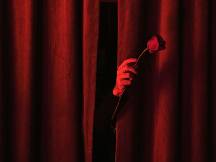 Close-Up Of Hand Holding Rose Behind Red Curtain