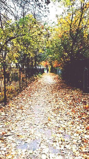 Autumn is my favourite season