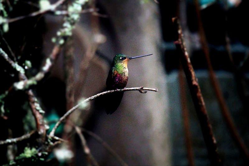 Beautiful Birds Nature Photography Hummingbird
