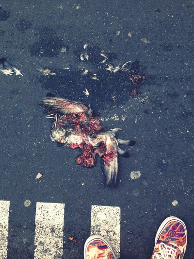RIP bird Shoes Vans Sneakers Paris