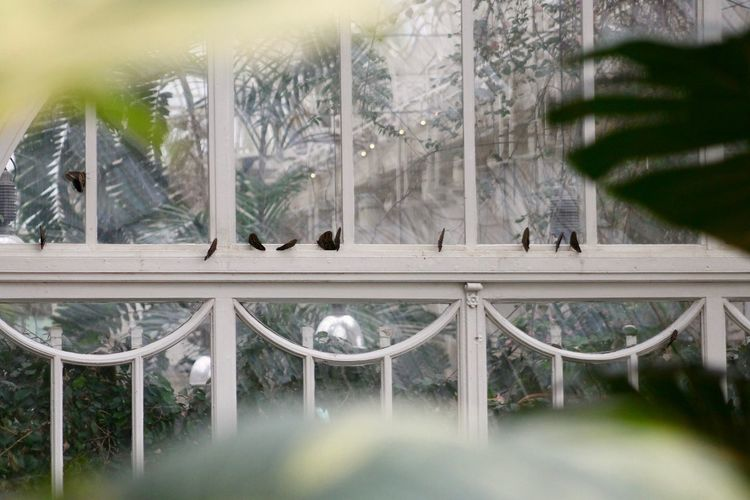 Beauty In Nature Butterflies Green Hidden Nature Out Of The Box Vintage White Frame Windows