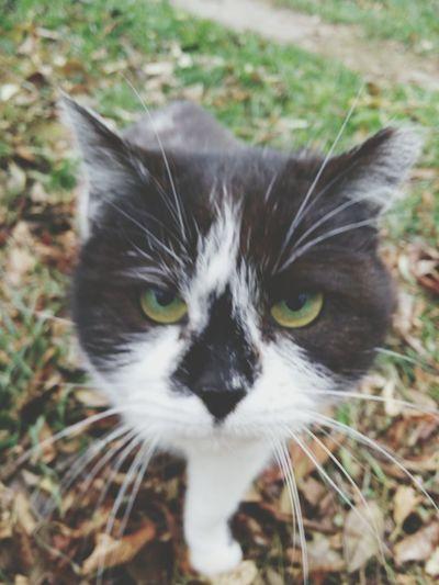 Green Eyes Cats котики Beautiful Animals
