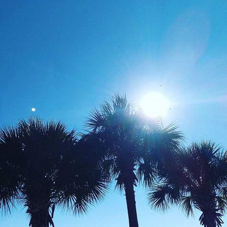 Ugly Morning to Beautiful Afternoon LoveFl Emeraldcoast Emeraldcoasting Palmtrees Sun Beachlife HTCOneM9 Htconelife Oneography 20 .7mp @htc @HTCUSA @HTC_UK @HTCelevate @HTCMEA @HTC_IN @HTCIreland @HTCCanada @HTCMalaysia @htcsouthasia @htcfrance TeamHTC IBleedGreen @sharealittlesunshine @pureflorida