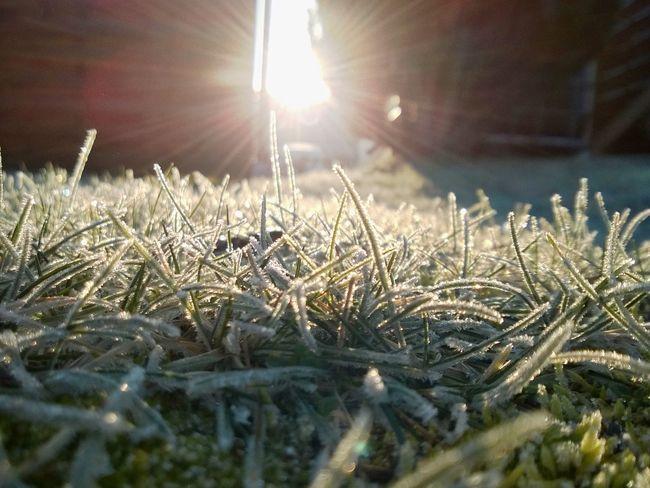 Grass Green Frost Frosty Frosty Morning Taking Photos No People Sun Sunrise Sunlight 2016 Lumia920 Windows 10 Windows 10 Mobile Postprocessing Enlight Enlight App Outdoors Sunset #sun #clouds #skylovers #sky #nature #beautifulinnature #naturalbeauty #photography #landscape Nature Nature Photography Frosty Mornings Frosty Frozen