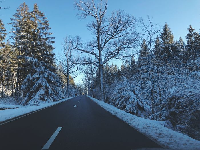 Empty road in a winter landscape Winter Wonderland Wintertime Forest Pine Tree Roadtrip Street Sunlight Tree Plant Transportation Road No People Nature Direction Snow Winter Car Outdoors Car Point Of View Beauty In Nature Cold Temperature Sky