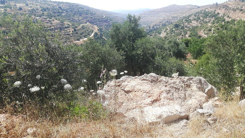 Taking A Stroll Near East Traveling Palestinian Territory Machrour Valley Israel Valley Hiking Palestinian Palestine Machrout Valley West Bank Bayt Dschalla Beyt Jala Beyt Jalla