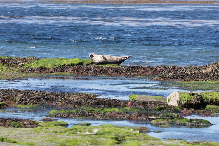 Sea lion on island