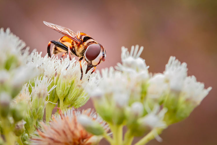 Flybee Flower