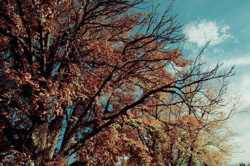 Nature Trees Growth Beauty In Nature Autumn Change Outdoors Nature_collection Nature Photography Naturelovers Natural Beauty