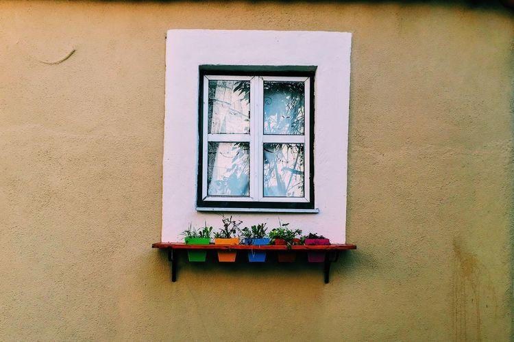 Flower pots on white window sill