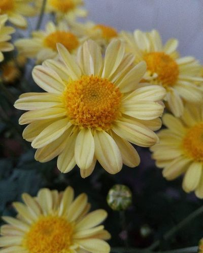 These tiny Yellow Flowers are one of the many new additions to our indoor Garden today Macro Wellitwasanattempt