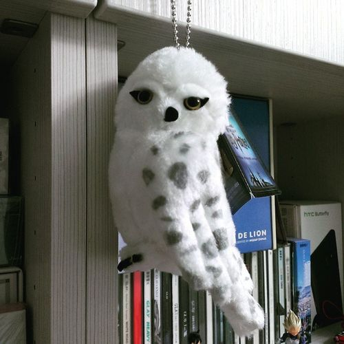 Harrypotter Hedwig so cute