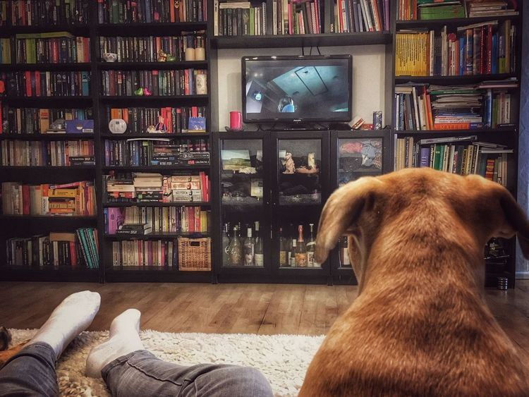 Da mach ich mir jetzt einen Lazy Saturday Afternoon Bookshelf Shelf Book Indoors  Library Home Interior Domestic Animals Living Room Animal Themes Dog Pets Mammal Day A Part Of Me Watching A Movie The Week Of Eyeem Ladyphotographerofthemonth Eye4photography  Pet Portraits