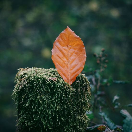 the beautiful brown tree leaves in the nature Leaves Leaf Brown Nature Beauty In Nature Beauty Beautiful Tree Leaves Color Colorful Fragility Fragile Autumn Fall Winter Park Mountain Outdoors