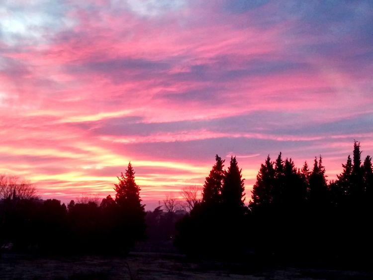 Tree Sunset Dramatic Sky Silhouette Cloud - Sky Landscape No People