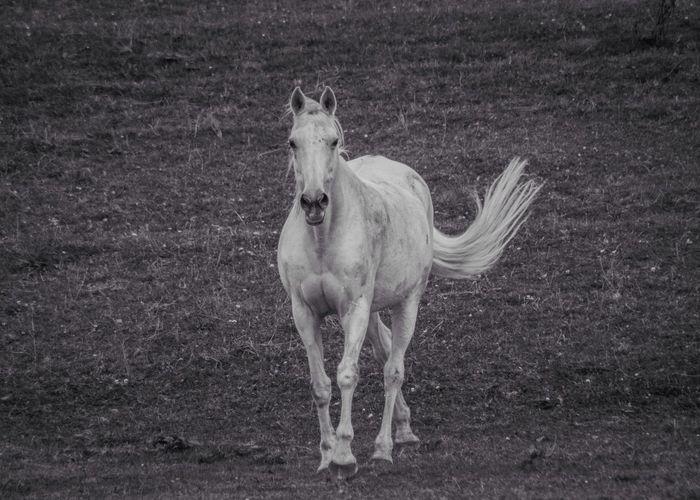 Horse walking on field