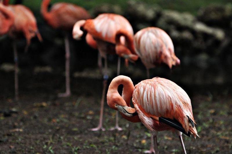 Flamingos, is there anything else to say?