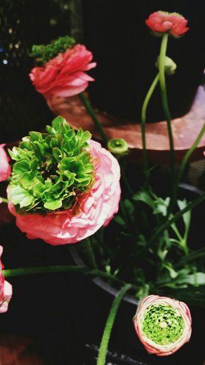 Flowers Spring Florist Celeo Mall Kokubunji Tokyo Tokyospring2016 Japan Naturelover Travelphotography