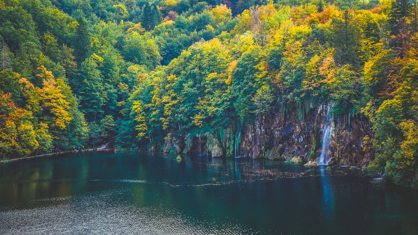 High angle view of one of the lakes at Plitvice Autumn Autumn colors Autumn Leaves Green Lakeview Nature Nature Photography Plitvice Lakes National Park Tree Trees Forest Forest Photography Greenery Lake Lake View Lakeshore Lakeside No People Plitvice Plitvice National Park Reflection Scenics - Nature Tranquil Scene Waterfall Yellow