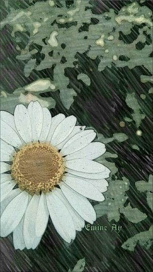 Al eline kalemi AŞK'ı çiz dediler... Kimi sevdalıyı gördü, kimi sevdayı... Aşk Aşkıntaakendisi Love Love Is All Around Love Is Everywhere Aşkın Zirvedeki Hâli 💕💕Papatya Papatya Aşktır 🌼 Papatya🌻 Daisy Daisy Flower Daisylove çiçek Fotoğrafçı çekmek çok Zevkli Flowers_collection çiçekli ı Love Travel Çiçekler Güzeldir 🎈🎈🎀💕 Flower Collection Flowers And Plants Flowers And Greenery ı Love Taking Photos Flowers Painting