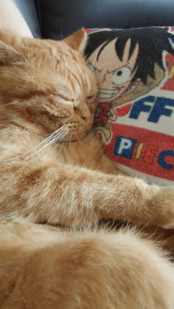I like sleeping 🐈💤😪😪😪 翻轉視界 喵星人 Catboy Wish Focus 猫 Sleep