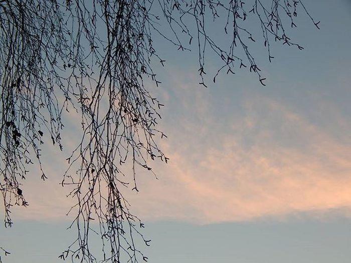 Spring Springiscoming Latvija Latvia Latvijasdaba Naturephotography Nature_wizards Nature_brilliance Natur_photograph Fotofanatics_nature_ Fotocatchers Amateurs_shot Best_free_shot Total_shot Versatile_photo_ Pastel Prettiestpastels Loves_life Heart_imprint