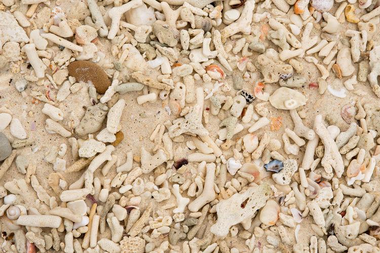 Full Frame Shot Of Seashells At Beach