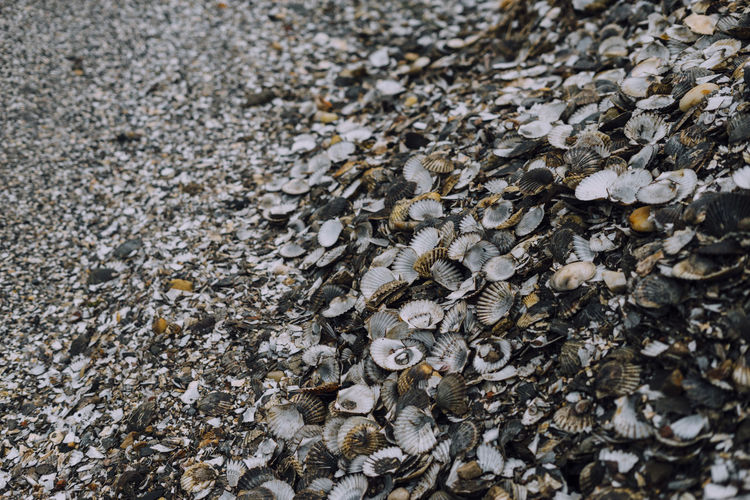 scallop shells Full Frame No People Nature Day Backgrounds Textured  Rock Close-up Rock - Object Animal Wildlife Solid Outdoors Pattern Animals In The Wild High Angle View Abundance Selective Focus Large Group Of Objects Animal Group Of Animals Lichen