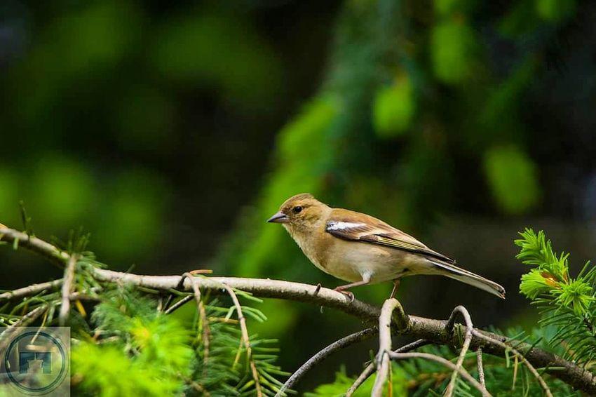 Bird Photography Birds Bird Nature Wildlife