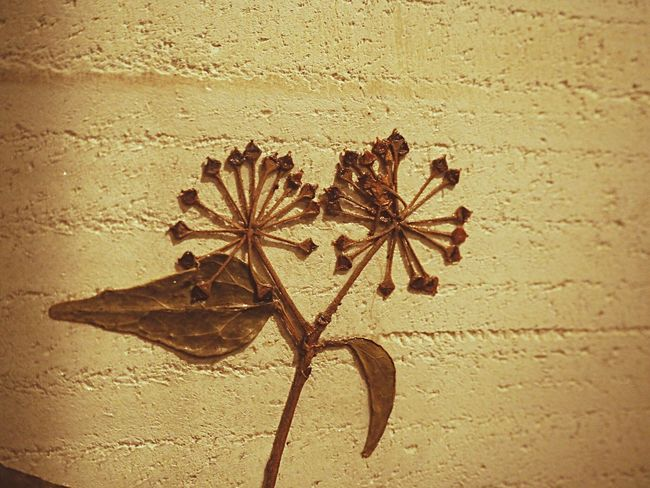 Flawer Dry Flower  Flawercollection Vintage Antique Vintage Art Retro Plassed Flawer Wall Art Wall Wallart Cafe Small Flowers SmallFlowers Dryleaf Leaf Flawers