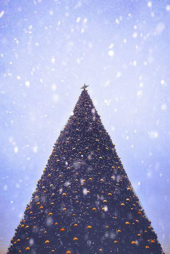 Christmas tree during snow fall