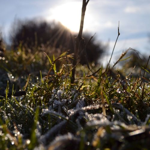 Ground Level Frost