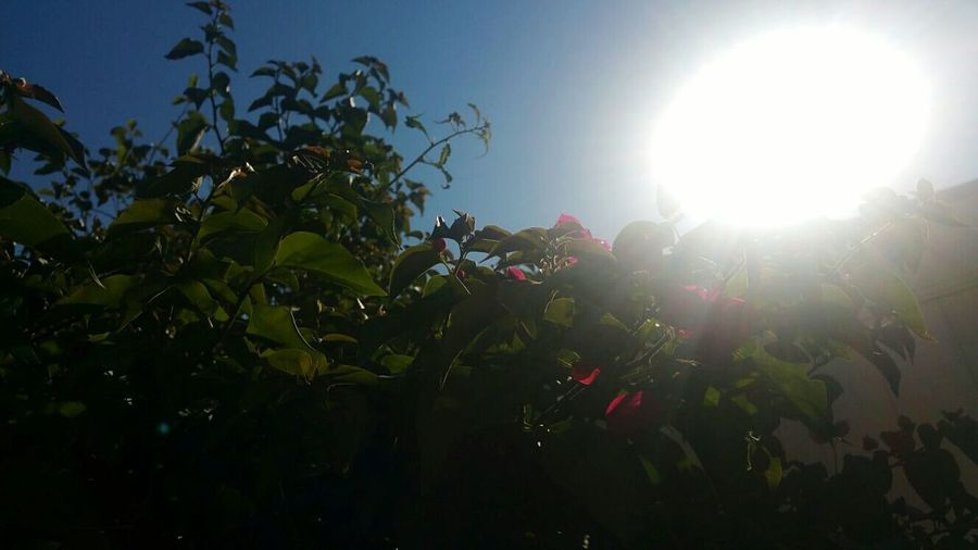 Taking Photos Check This Out Hello Sunshine Plant Life Eye4photography  EyeEm Nature Lover Secret Garden