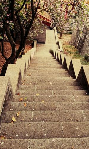 Steps And Staircases Steps Staircase The Way Forward Day Outdoors Sunlight No People Tree