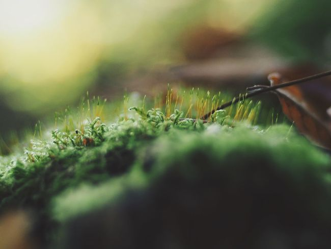 Selective Focus Plant Growth Green Color Close-up Nature No People Day Beauty In Nature Outdoors Plant Part Invertebrate Leaf Insect One Animal Land Freshness Macro Animal Fragility Spiky
