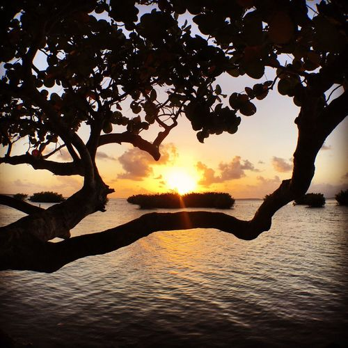Sunset Tree Silhouette Nature Beauty In Nature Scenics Sun Tranquility Sunlight Tranquil Scene Sky Reflection Outdoors No People Waterfront Branch Water Day sunset