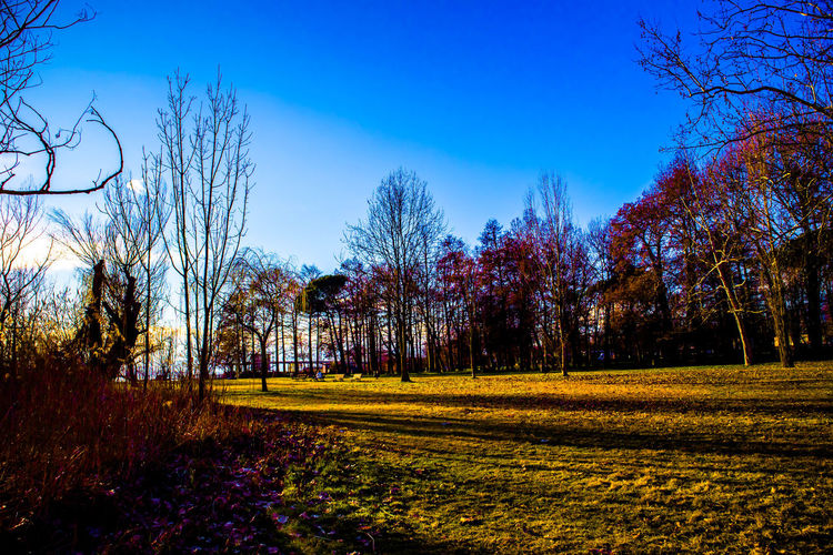 Trees on field against clear sky during autumn