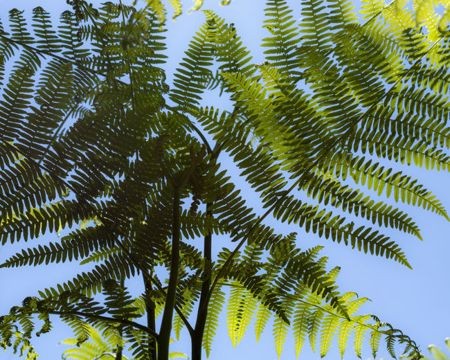Sunlight Scenics - Nature Fern Close-up Palm Leaf Outdoors Tranquility Sky Low Angle View Day No People Nature Beauty In Nature Plant Part Green Color Leaf Growth Tree Plant Ferns The Minimalist - 2019 EyeEm Awards