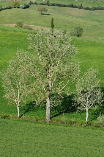 Plant Landscape